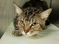 Tigger's story By adopting me today you will save the