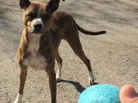 Meet Tigger!  Believed to be a whippet/pit mix, this
