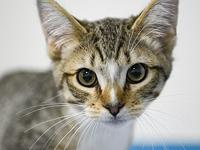 Tiggie's story Hi! I'm an adorable little kitty looking