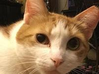Tiggy's story Beautiful golden-haired tabby Tiggy is a