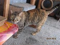 Tigress's story A pregnant female cat was found and