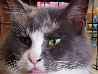 Tiki's story Beautiful Tiki is a loving and sweet girl