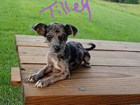 Tilley's story Our pets are physically located in NC(no