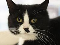Tillie's story This cat is ready for a forever home!