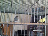 Large air travel bird cage gray powder coat, fantastic