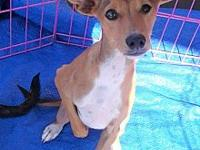 Timmy's story Say hello to Timmy! This darling little