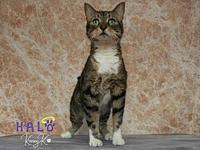 Timmy's story I am a handsome, curious and very loving