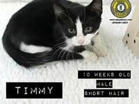 Timmy's story You can fill out an adoption application