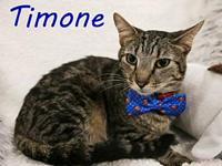 Timone's story Timone is a real sweet and loving boy.