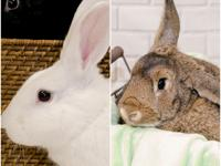 Timothy and Snow are a great pair of buns that love