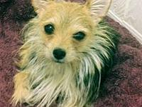 Tina's story Tina is a 3 year old Yorkie weighing about