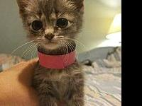 Tiney's story This kitten has been hand raised in a