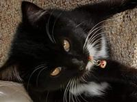Tink Female Kitten's story Hi, my name is Tink. I am a