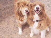 Tinker(right) and Wrangler(left) here!!!  How beautiful