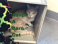 Tinker's story I'm a feral barn cat looking for a home.