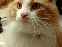 Tinker II's story Tinker is a beautiful, 16 pound,