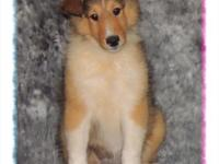 Tinkerbell is a beautiful sable, female collie. Birth