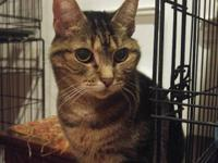 13yo Tinkerbell is available for adoption in Commack