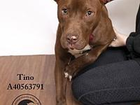 Tino's story All dogs come with a microchip, annual