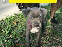 Tinsel's story 11 wk old cute pup ready for a new home,