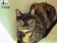 My story Tinsel is a friendly girl and enjoys petting.
