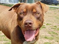 1 year-old Tinsley is a downright friendly canine, with