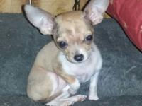 Tiny little Turbo is looking for his forever family. He