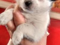 Beautiful baby girl needs loving home.. She is tiny and