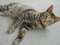 Tiny's story Tiny is a dainty 8-month girl with