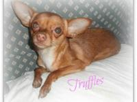 I have to rehome my Chihuahua. Her name is Truffles.