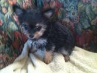 Meet Gracie. She is an itty bitty, little female