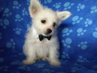 Tiny is listed at $1250 animal or $1800 with