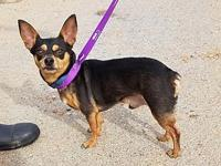 Tiny's story By adopting me today you will save the