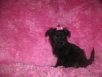 THIS LITTLE FEMALE IS A LOVING LITTLE MINI SCHNOODLE.