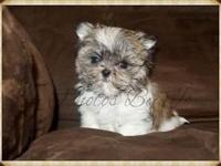 I have for sale one small M-Ki puppy. He is a male and