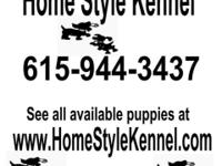 I have Pomeranian, Yorkie-Poo & Pek-a-Pom puppies