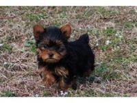 Description Our puppies are of the highest quality and