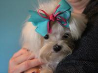 Elsa is a teacup Maltese, almost 9 months old, crate