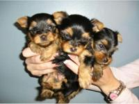 9 weeks, 3 boys and 3 girls $800 and up available now!