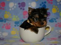 at this time we have 2 tiny teacup females available:
