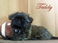 Teddy is from Monkey & Zac's litter born on 7/8/15. He