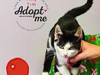 Tiny Tim's story iJust in time for Christmas! Meet Tiny