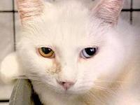 Tiny Tim's story This cute animal is available for