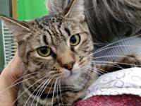 Very sweet kitty, will be neutered on October 21st and