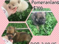 5 gorgeous babies looking for their new homes starting