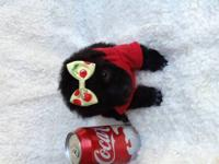 Tiny toy poodle boy price $500 Adorable little poodle