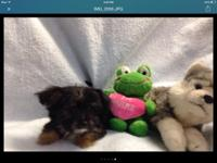 i have a beautiful male and female puppy available ,