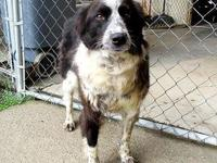 Tip's story 18-D08-008 Tip Breed: Border Collie Mix