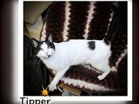 Tipper's story You can fill out an adoption application