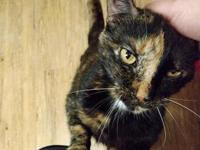 Tippi's story Tippi is an affectionate senior cat